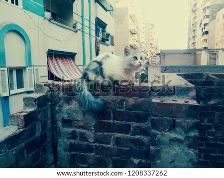 my beautiful johnny cat in my roof