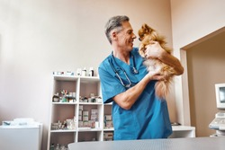 My best part of work! Middle aged positive vet in work uniform talking with small ginger dog while standing at veterinary clinic