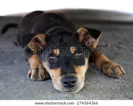 my cute black dog