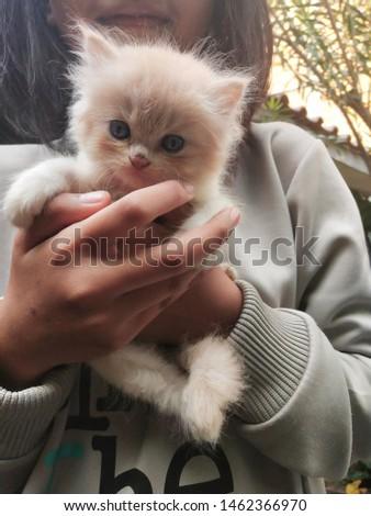 my cute cute lovely kitten