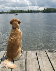 My dog must have sat there motionless for an hour watching these fishermen