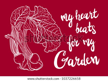 My heart beats for my garden. Hand drawn bordo illustration of baby Beets, Beet, Beetroots With Leaves. For t-shirt, poster, print, postcard.