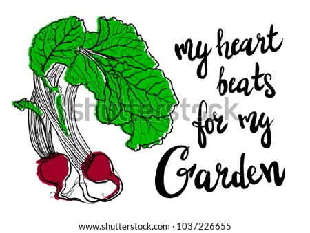 My heart beats for my garden. Hand drawn colorful illustration of baby Beets, Beet, Beetroots With Leaves. For t-shirt, poster, print, postcard.