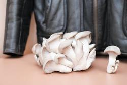 mycelium leather, bio based sustainable alternative to leather made of mushroom spores and plant fibres. mushroom textile innovative materials. eco bio-gradable vegan leather