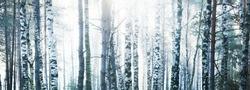 Mysterious birch forest in a morning haze at sunrise. Sun rays flowing through the tree trunks. Latvia. Idyllic autumn scene. Dark landscape
