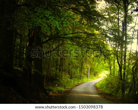 Mysterious broad leaf trees forest at summer afternoon daylight.Forest road leading from woodland,broad leaf trees,forest floor,tree trunks,green leafs.Czech Republic, Europe.