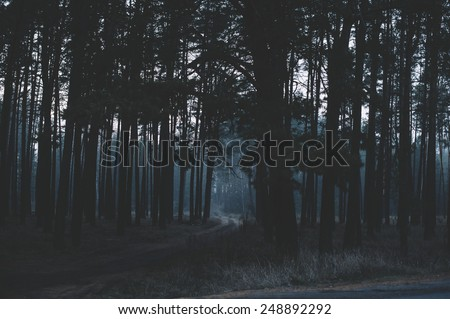 Mysterious dark night forest #248892292