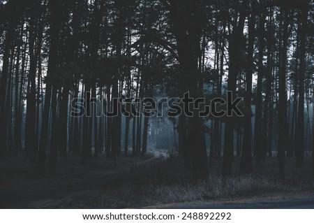 Mysterious dark night forest