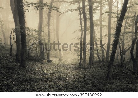 mysterious dark old forest in...