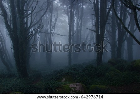 Mysterious dark old forest with fog in the Sintra mountains in Portugal #642976714