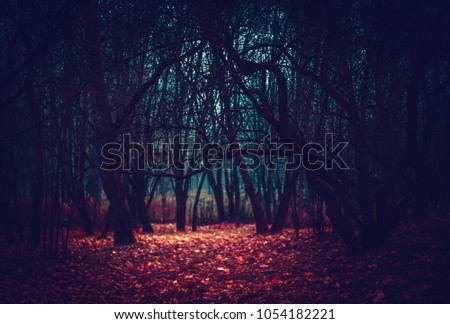Mysterious fairy forest in a fog. Strange glade moonlit in the forest  #1054182221