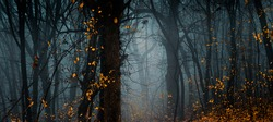 Mysterious fall forest. Footpath in the beautiful, dark, fairy, foggy, autumn, mysterious forest, among high trees with yellow leaves. Panoramic wide shot.