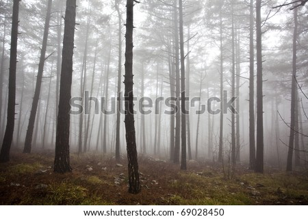mysterious forest in winter - photo #15