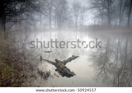 Mysterious forest at foggy morning in swamp area