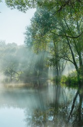 Mysterious forest lake in the predawn morning fog. The sun's rays pass through the branches of trees forming magical shadows and a fabulous atmosphere. Silhouettes of trees are reflected in the water.