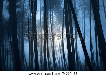 mysterious forest on a full moon misty night