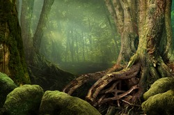 Mysterious forest, weird trees, roots and mossy rocks