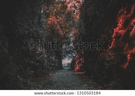 mysterious forest, with a mysterious path #1310503184