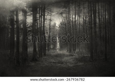 mysterious forest  with a...