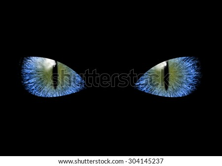 Stock Photo Mysterious grim blue eyes of black cat or ninja