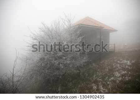 Mysterious house in the forest with fog and a tree. The old spooky house on the land of nowhere. Winter Landscape #1304902435