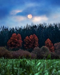 Mysterious landscape in cold tones. Night meadow with grass and red trees under the full moon and dramatic night cloudy sky. Big orange moon over pine trees in field. Dew drops on grass. Rising sun.