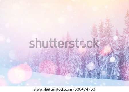 Mysterious landscape majestic mountains in winter. Magical snow covered tree. Photo greeting card. Bokeh light effect, soft filter. Carpathian Ukraine.