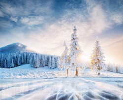 Mysterious landscape majestic mountains in winter. Magical snow covered tree. The lake is frozen on the front. Bokeh light effect, soft filter. Carpathian Ukraine.