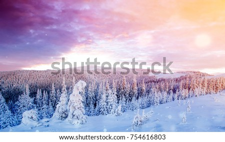 Mysterious landscape majestic mountains in winter with snow covered tree. Photo greeting card. Bokeh light effect, soft filter. Carpathian. Ukraine. Europe