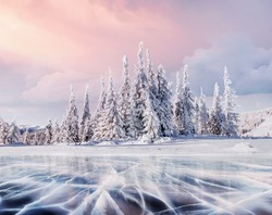 Mysterious landscape majestic snow covered tree. The blue ice lake is frozen on the front. Carpathian Ukraine.