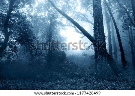 Photo of  Mysterious landscape of foggy forest
