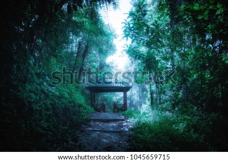Mysterious landscape of foggy forest with path way through lush and wooden pavilion in tunnel. Surreal beauty of exotic tropical jungles. Fantasy nature and fairy tale background