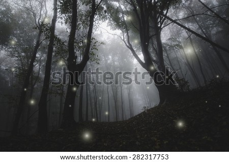 mysterious magical lights sparkling in fantasy forest at night