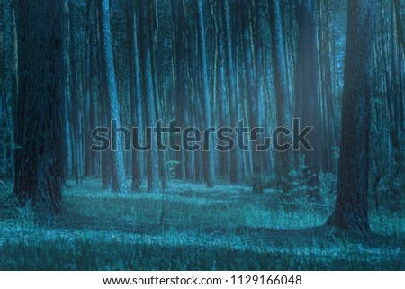 mysterious moonlight highlights a forest clearing at night cleanly and no one around only high pine trees an exciting atmosphere