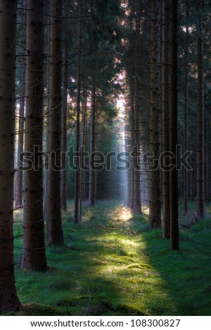 Mysterious morning light in a dark forest