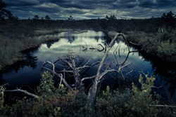 Mysterious night forest with swamp on halloween. Scenery of dark forest with swampy lake in moonlight. Panoramic scenic view of marsh or swamp with dead dry tree in water. Nature at hallowen dusk.