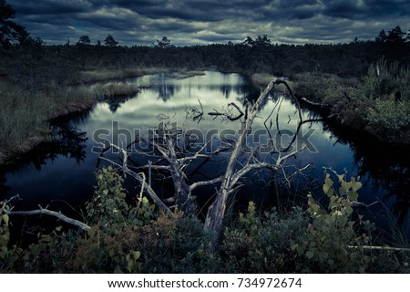 Mysterious night forest with swamp on halloween. Scenery of dark forest with swampy lake in the moonlight. Panoramic scenic view of marsh or bog with a dead dry tree in the water at dusk.