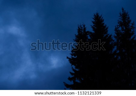 Mysterious nocturnal night cloudy sky against mystery silhouettes of fi trees #1132121339
