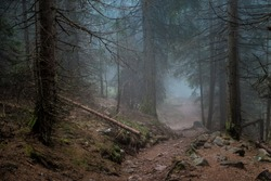 Mysterious path. Mysterious forest. Road in the forest. Misty forest. Enchanted forest. Fog in the woods. Dark woods.