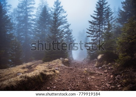 Mysterious path. Mysterious forest. Road in the forest. Misty forest. Enchanted forest. Fog in the woods.