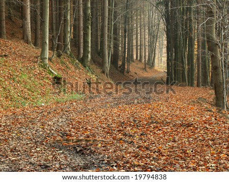 Mysterious path through the forrest