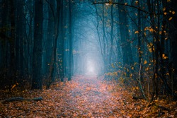Mysterious pathway. Footpath in the beautiful, foggy, autumn, mysterious forest, among high trees with yellow leaves.