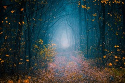 Mysterious pathway. Footpath in the dark, cold, foggy, autumn forest with high trees. Arch through the autumn misty forest with yellow leaves.
