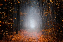 Mysterious pathway. Footpath in the dark, foggy, autumnal, misty forest with high trees. Arch through autumnal forest with yellow leaves.