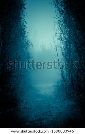 Mysterious pathway. Footpath in the dark, foggy, autumnal, mysterious alley, among high trees.