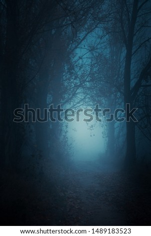 Mysterious pathway. Footpath in the dark, foggy, autumnal, mysterious forest.