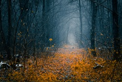 Mysterious pathway in an autumn forest with remains of first snow. Footpath in the beautiful, foggy, dark, autumn, mysterious forest, among high trees with yellow leaves.