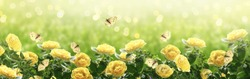 Mysterious spring or summer bright background with many yellow fluttering butterflies and blooming fantasy yellow roses flowers blossom and glowing sparkle bokeh