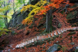 Mysterious stairs on mountain slope covered with fallen leaves in autumn