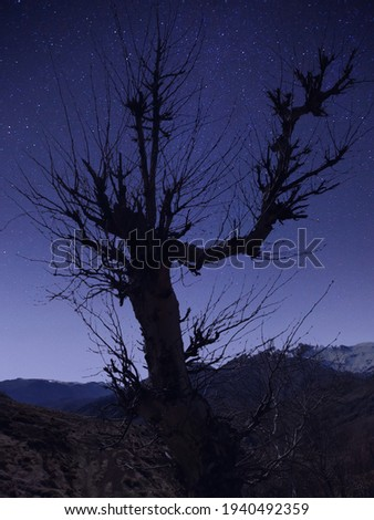 mysterious tree left alone in the infinite universe.. Stok fotoğraf ©